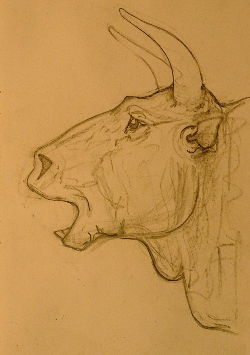 Another Bull study