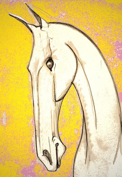 a horse head11